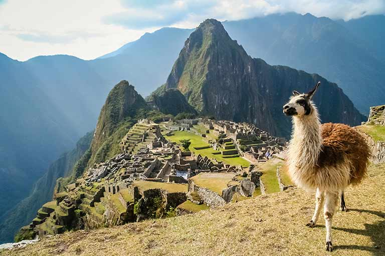 A llama stands on a mountain overlooking ruins