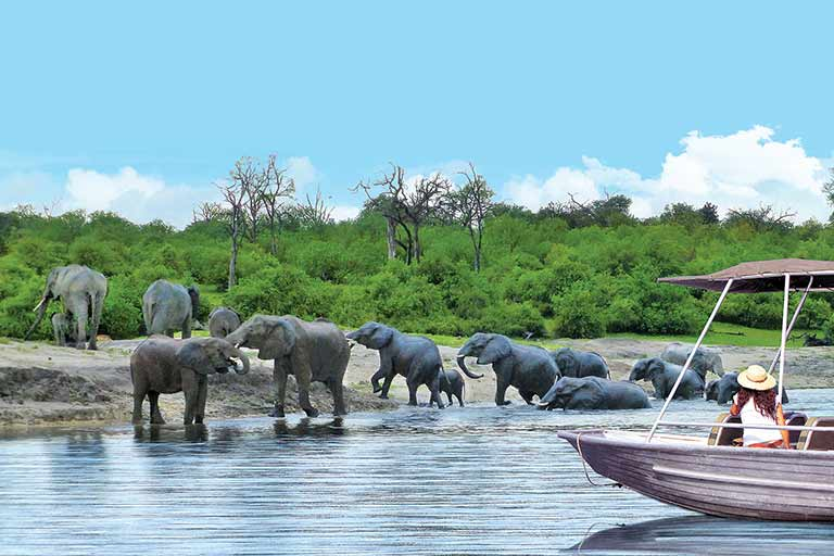 A woman in a boat looks at a herd of elephants crossing a river