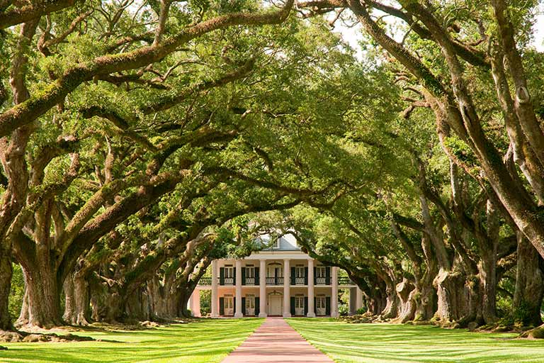 Looking down a path between towering live oaks toward a white columned plantation house